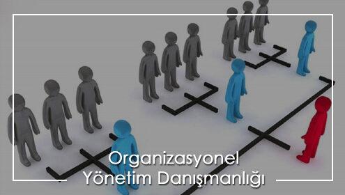 organizasyonel yönetim danışmanı, yönetim danışmanlığı eğitim